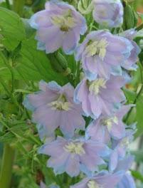 les fleurs  pour le bien être
