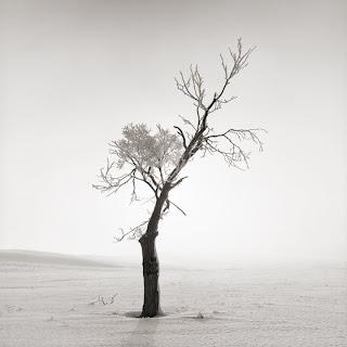 Black and white photos of Utah Lake - Hasselblad 500CM - Brandon Allen
