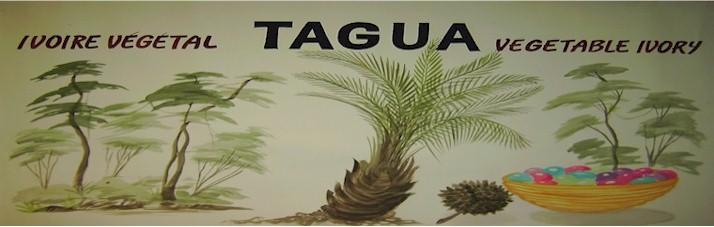 Tagua Portugal