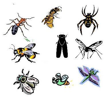 Hm, yang aku ingat, kawan aku c fazwan yang takut dengan serangga ni
