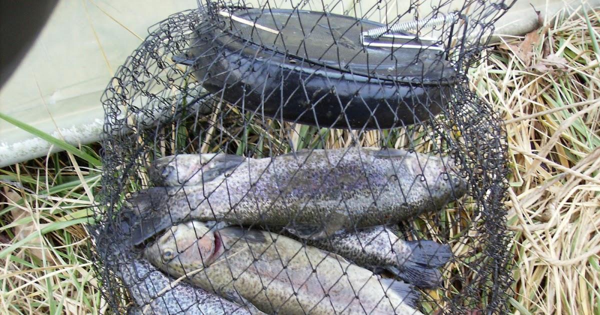 Fish missouri busch wildlife ca st charles county mo for Busch wildlife fishing