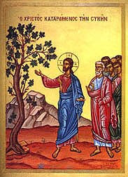 معجزة شجرة التين التي يبست  Jesus%2B-fig-tree