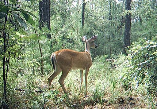 Deer Meat Tonight