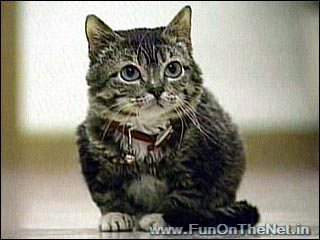 Video images artcles 10 of the world 39 s smallest animals - Smallest cat in the world guinness ...