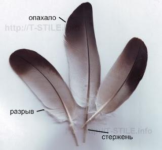 Контурные птичьи перья