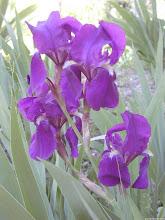 """<a href=""""http://cantaresdeamigo.blogspot.com""""/><b>Avelaneira Florida</b></a>"""