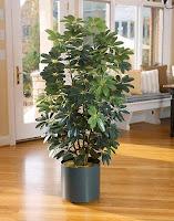 Bellarosa Designs - Flower for Decor: Artificial Silk Floor Plants