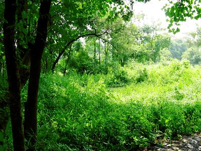 trees in gauripada