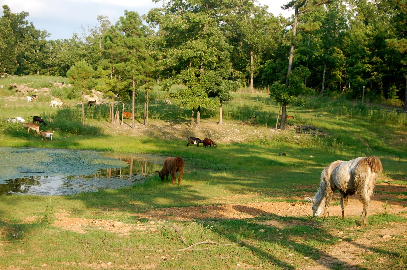 how to start a pasture