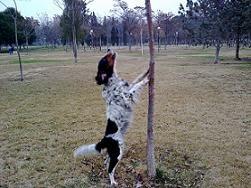 Rincón del cagnolino rampante: historias de perros y otros parientes. Clica sobre la imagen