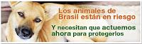 Acción para proteger a los animales de Brasil