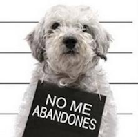 NO ME ABANDONES