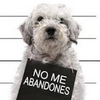 NO ME ABANDONES