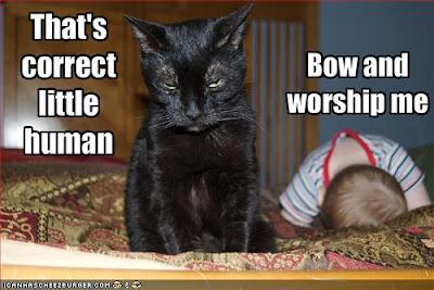 cat-demands-that-baby-worship-him.jpg