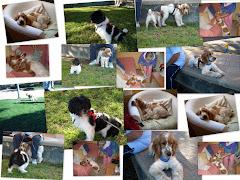 Mis perritos Fito y Frey