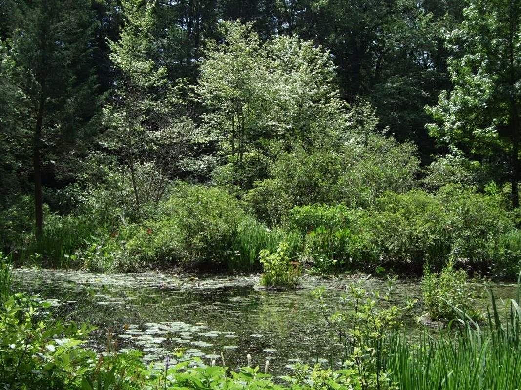 Seeing New England Garden In The Woods Framingham Massachusetts