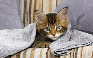 Comfortable Kitty Wallpaper