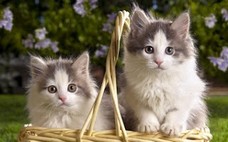 Cute Cat Pair
