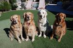 Jack, Jill, Harley & Kona