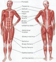 Tata Cara Massage atau Pijat