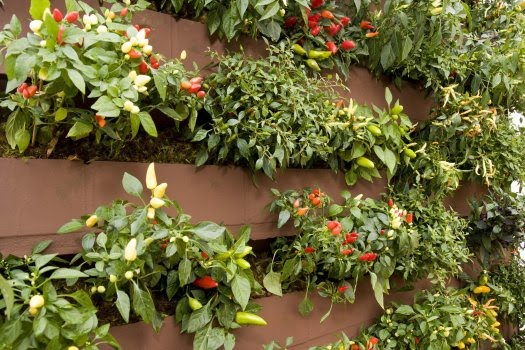 jardim vertical tijolo: ou um jardim no meio da selva de concreto de nossas cidades