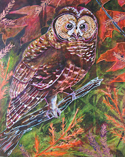 Spotted Owl #1