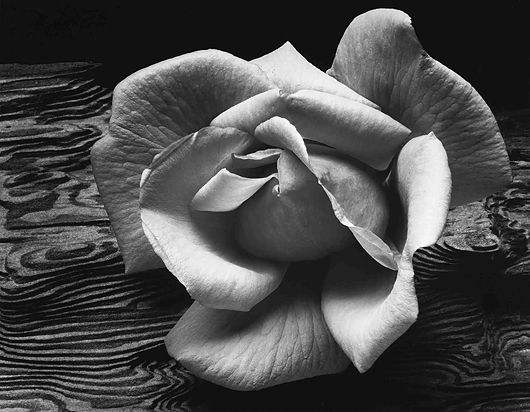 [Rose+on+Driftwood+by+Ansel+Adams.jpg]