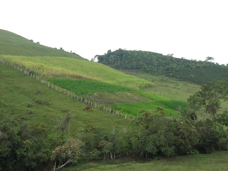 El Campo Colombiano