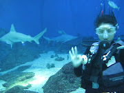 Shark Dive at Maui Ocean Center (maui ocean center )