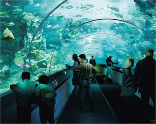 главный аквариум Океанариума, тоннель