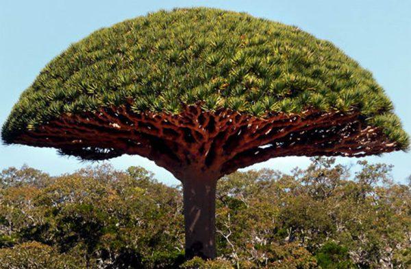 [Socotra_20090119-014.jpg]