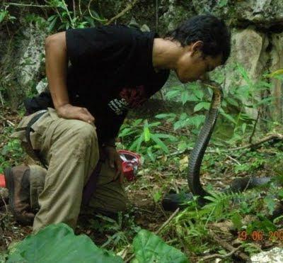 Panji Sang Penakluk Tewas Dicabik Komodo