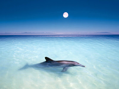 dolphins wallpapers. Dolphin Wallpapers (High