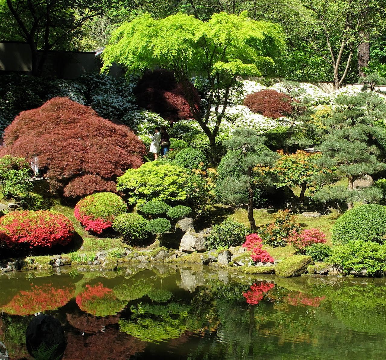 Japanese Garden: Woodland-Bonsai: Japanese Flavor-The Portland Japanese Garden