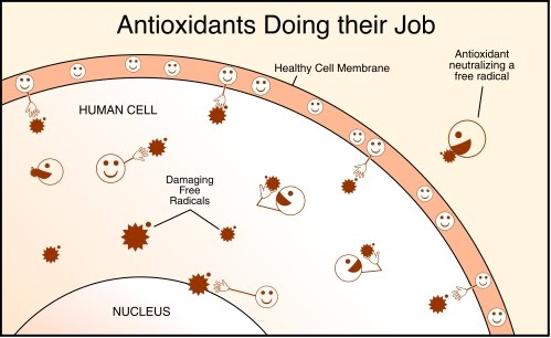 THE PROBLEM: THE ANTIOXIDANT MYTH