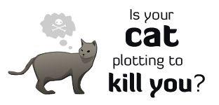¿está tu gato planeando matarte?