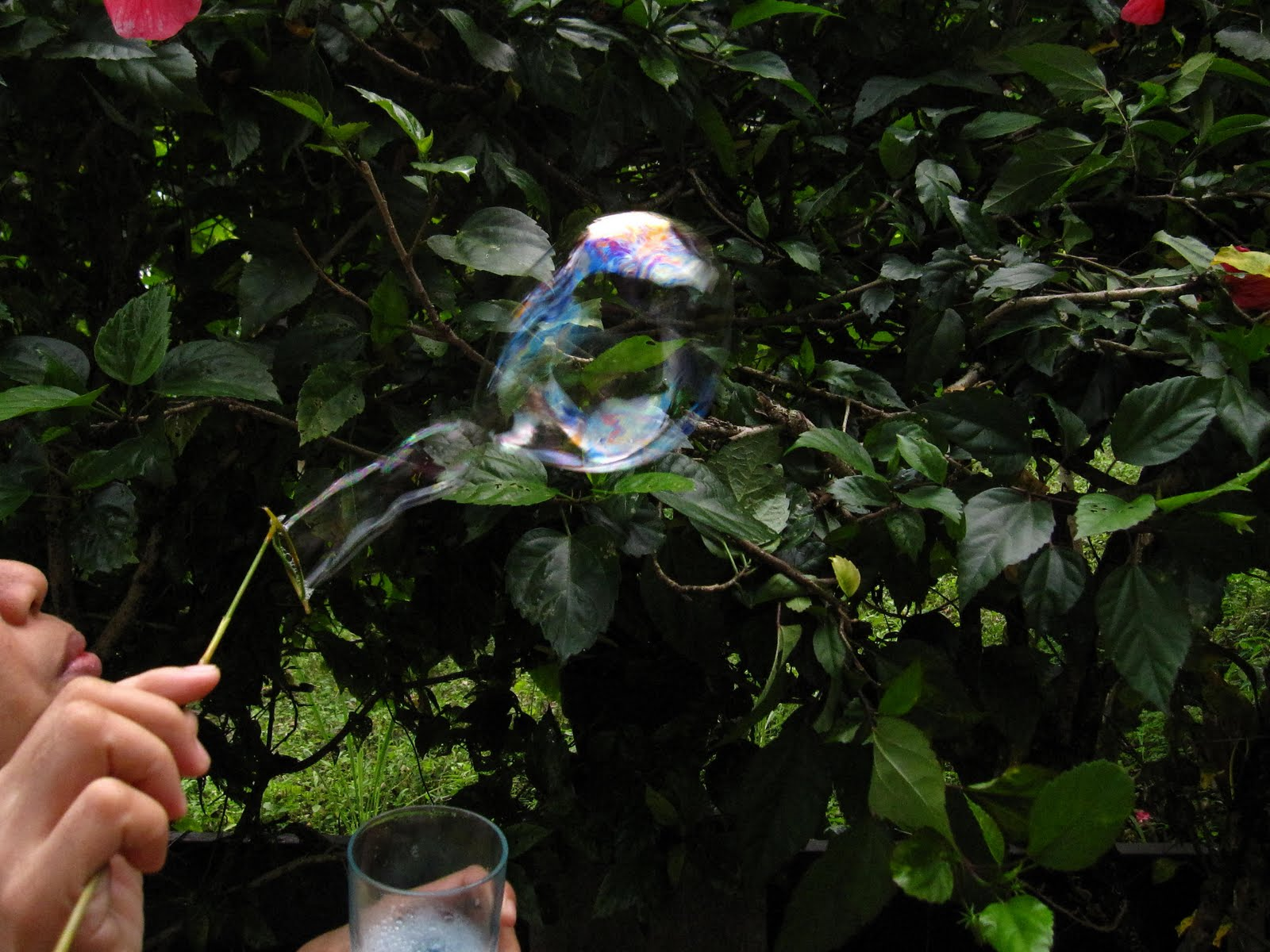 gumamela bubbles