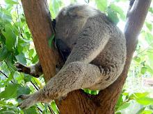 Sally's koala
