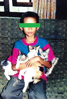 generasi kucing