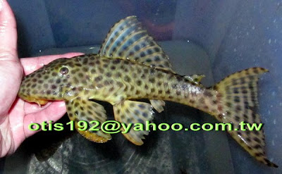 Tropical Fish Importer: ??? 2010