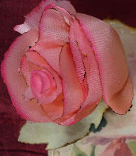 Another of my roses
