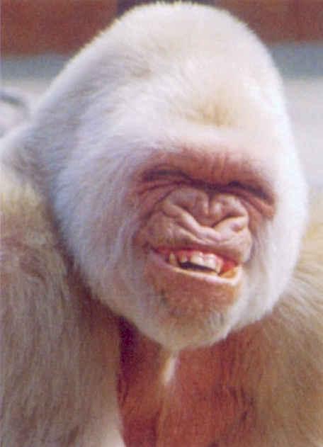 http://3.bp.blogspot.com/_icSSSI9O1QI/S8WKvozJX5I/AAAAAAAAAEk/24MlNXMrlF4/s1600/monkey_smile.jpg