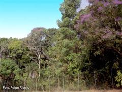 Vegetação Florestal Cerradão