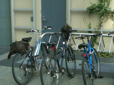 wild turkeys on bicycles