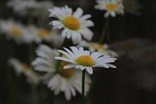 FOTO / FLORI: Canon 50D, 70-200 mm