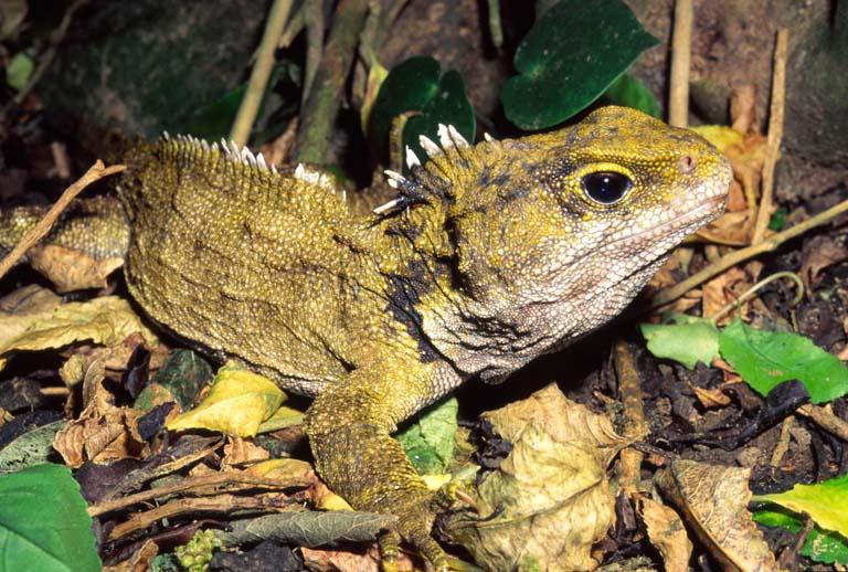 Los 5 reptiles más Grandes del mundo