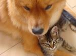 """""""Os animais dividem conosco o privilégio de terem uma alma."""" (Pitágoras)"""