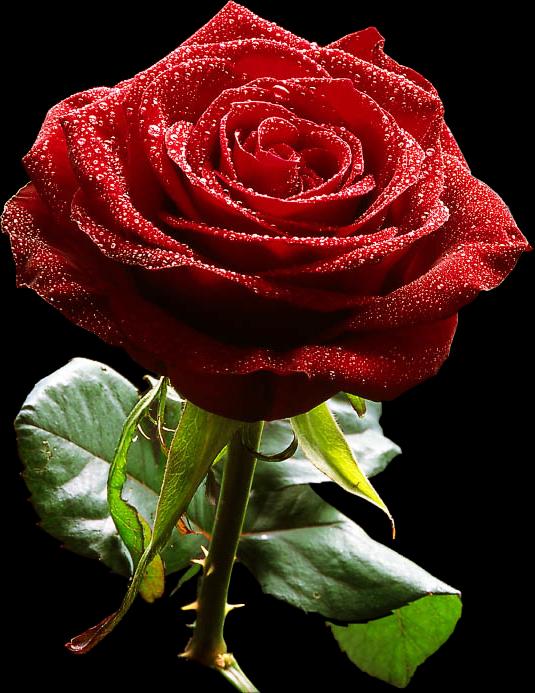 jardim rosas de saron:Brilho da vida: Setembro 2010