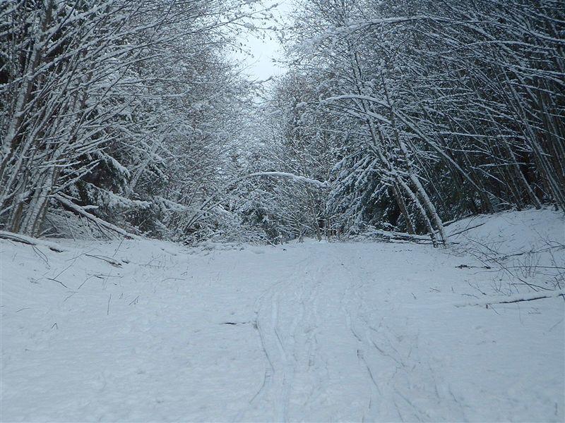 [snowywoods]