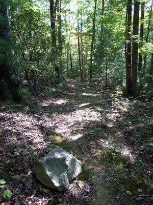 Trail at cabin...